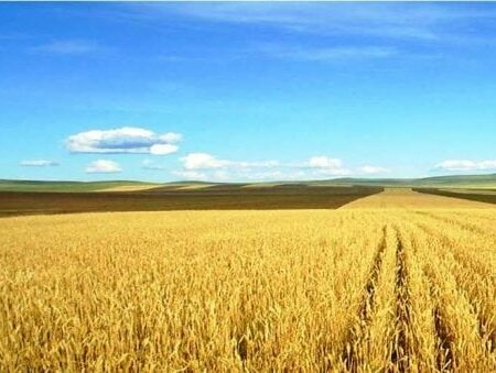 Agricultural Farming in Mongolia