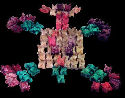 Multicolored turtle
