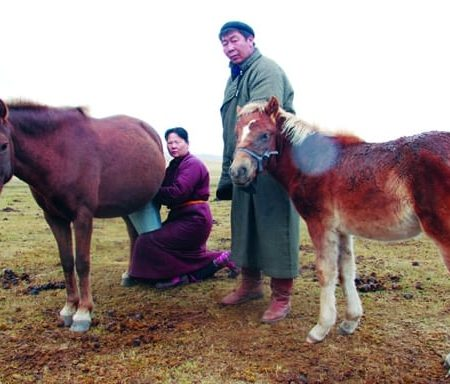 Airag – Mongolian Traditional Fermented Mare's Milk