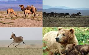 Environmental protection in Mongolia from the ancient time